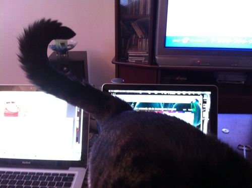 macbooks cat