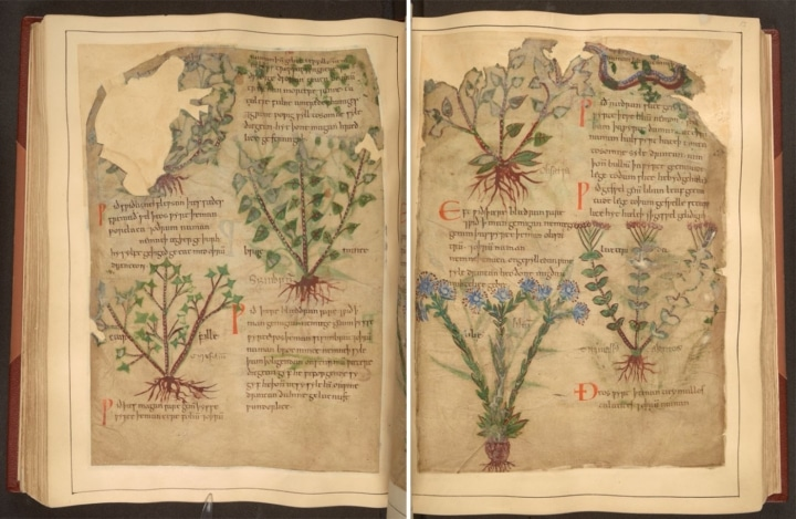 An herbal manuscript